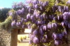 The-CoachHouse-with-wisteria-002